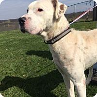 Adopt A Pet :: Apollo - Sistersville, WV