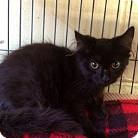 Adopt A Pet :: Earth - Trenton, NJ