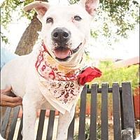 Adopt A Pet :: Delilah - Mesa, AZ