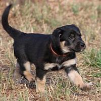 Adopt A Pet :: Kandle - San Diego, CA