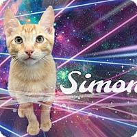 Adopt A Pet :: Simon - Tucson, AZ