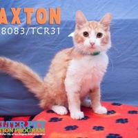 Adopt A Pet :: CRQ 4 - San Angelo, TX