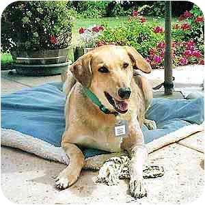 Shepherd (Unknown Type) Mix Dog for adoption in San Diego, California - Annie