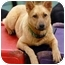 Photo 4 - Husky/Shepherd (Unknown Type) Mix Dog for adoption in Los Angeles, California - Kodiak