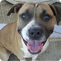 Adopt A Pet :: Brawley - Fowler, CA