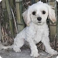 Adopt A Pet :: Princess - North Palm Beach, FL