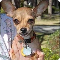 Adopt A Pet :: Dasher - Houston, TX