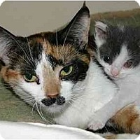 Adopt A Pet :: Joy - Montgomery, IL