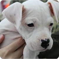 Adopt A Pet :: Luna - ARDEN, NC