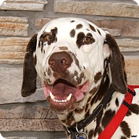 Adopt A Pet :: Bailey - Newcastle, OK