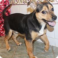 Adopt A Pet :: Toby - Chapel Hill, NC
