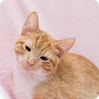 Adopt A Pet :: Stormy II - Fountain Hills, AZ