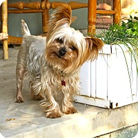 Adopt A Pet :: Hamilton - Los Angeles, CA