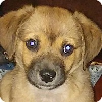 Adopt A Pet :: Buster - Hagerstown, MD