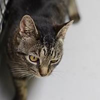 Adopt A Pet :: Las Vegas 170556 - Atlanta, GA