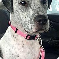 Adopt A Pet :: Gemma - Irmo, SC