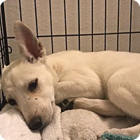 Adopt A Pet :: Opal - Denver, CO