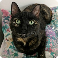 Adopt A Pet :: Miss Kitty - Austintown, OH