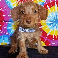 Adopt A Pet :: Kingston - Troutville, VA